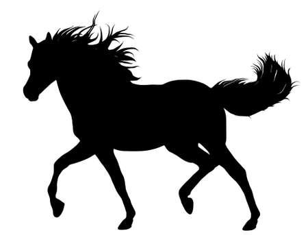 galop: Silhouette de cheval noir isol� sur fond blanc