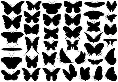 silhouette papillon: Papillon mis en isolé sur blanc