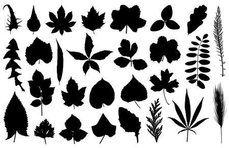 aspen: Set of different leaves isolated on white