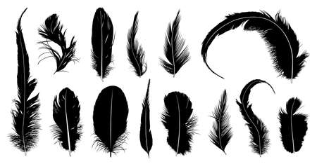 plume: Set of different feathers isolated on white
