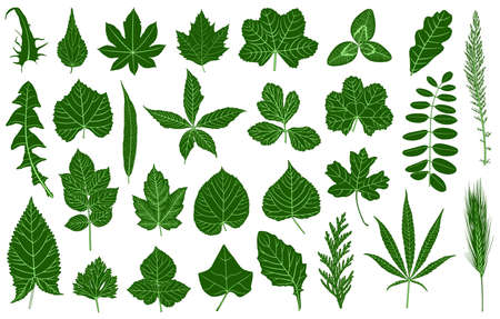 Set of different leaves isolated on white Vector