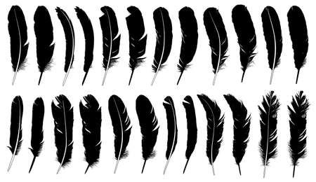 Set of different feathers isolated on white