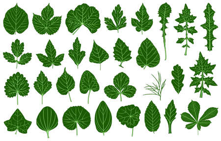 thistle: Illustration of different leaves isolated on white Illustration