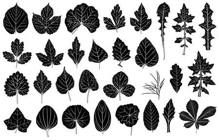 thistle: Set of different leaves isolated on white