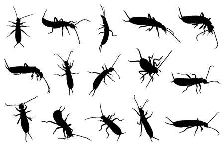 Set of different earwigs isolated on white background.