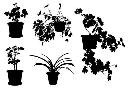 Set of different flowers in pots isolated on white