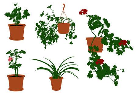Conjunto de diferentes flores en macetas aislado en blanco