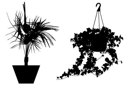 Illustration of different flowers in pots isolated on white