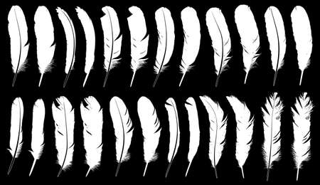 Collection of different feathers with black in background 向量圖像
