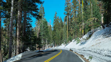 Curve road with thick snow and sequoia trees at the side in a bright clear sky. Stock Photo