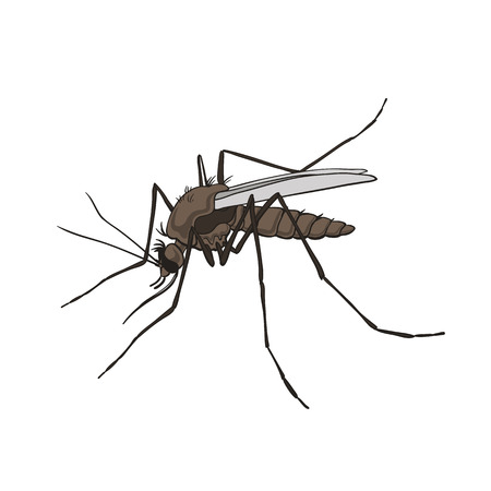 Mosquito. Colorful, isolated on a white background