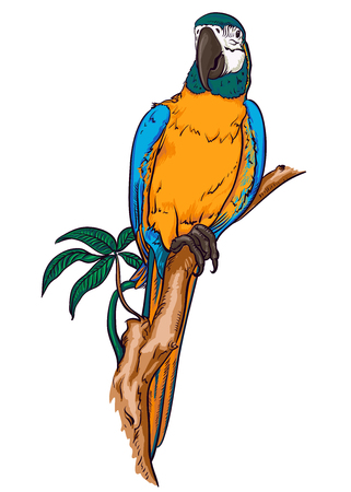 Parrot macaw on a branch Illustration
