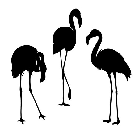 Flamingo isolated. Exotic bird. Silhouette three flamingo, decorative flat design element Иллюстрация