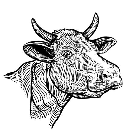 Koe hoofd close-up, in een grafische stijl. Vintage illustratie geïsoleerd op een witte achtergrond Vector Illustratie