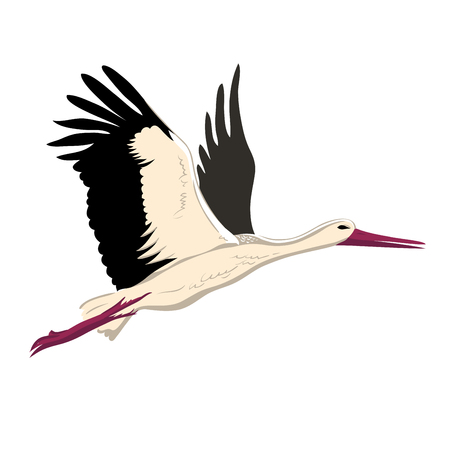 White stork flying (up wings). A beautiful white stork sketch style, side view, vector illustration isolated