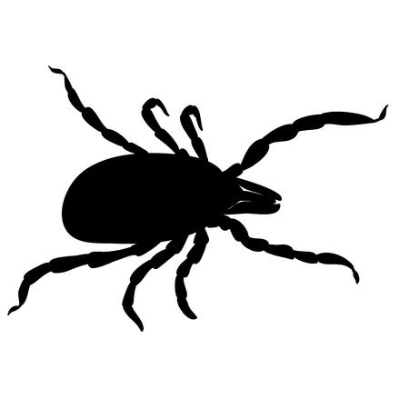 Parásitos de ácaros. Marque la silueta aislada sobre fondo blanco. Garrapata parásito, garrapata insecto. Bosquejo de garrapata