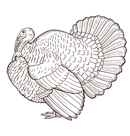 Turkey contour isolated on the white background, bird