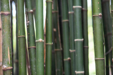 Pattern of bamboo In the bamboos background Stock Photo