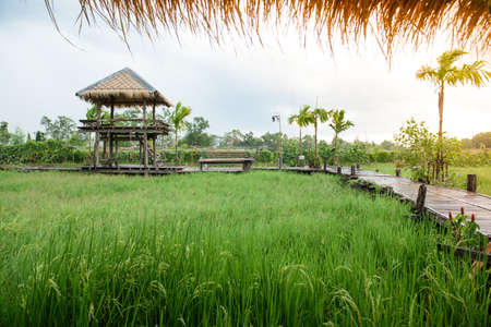 Small house on the rice field. For relaxing and sunbathing, avoid rain from work on the farm. Stock Photo