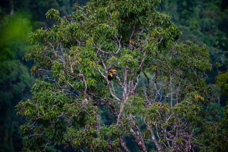 HornbillIs hanging to the tree on the hill.