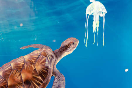 Exhibition of sea turtles and plastic waste from human beings, current environmental problems in the world