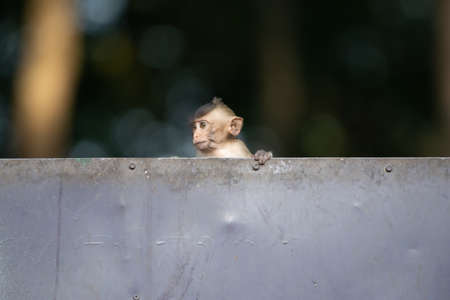 The baby monkeys are playing naughty, looking lonely alone while waiting for the mother.