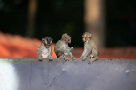 Many baby monkeys are playing naughty on the fence.