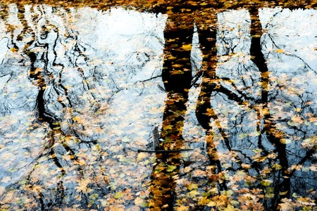 reflection of fallen leaves in water