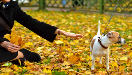 a woman holds out a hand of friendship to a dog looking the other way. Imagens