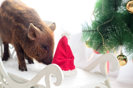 pig sniffs a hat of the new year on tree background.