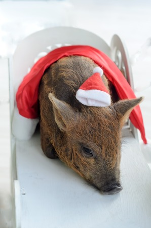 a pig with a small Santa hat on his head. Imagens