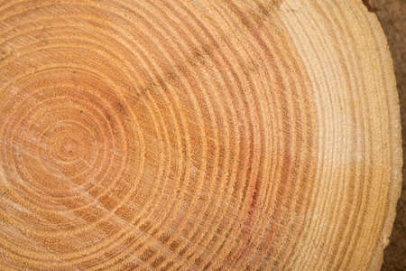close up of wooden texture of cut tree trunk
