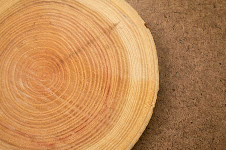 close up of wooden background of cut tree trunk