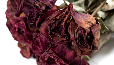 Closeup of withered roses photo