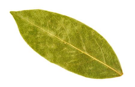 bay leaf: Bay leaf isolated