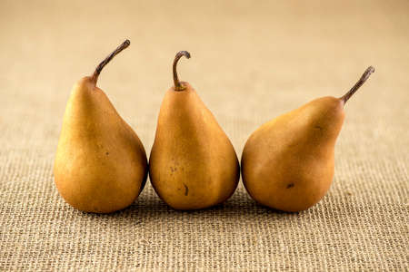 Line up of curvy shaped brown bosc pears Фото со стока