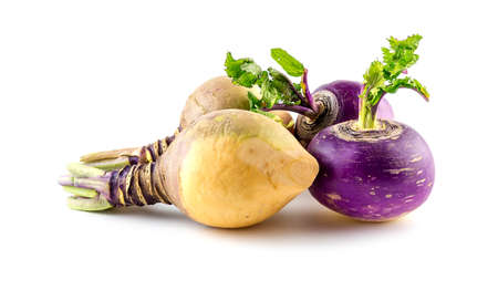 Freshly harvested turnips and swede produce Imagens
