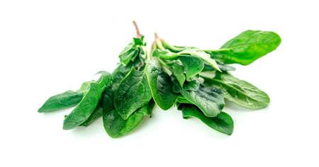 Organic nutritious salad spinach