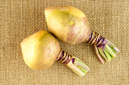 pointy: Fresh homegrown swedes with pointy shaped ends Stock Photo