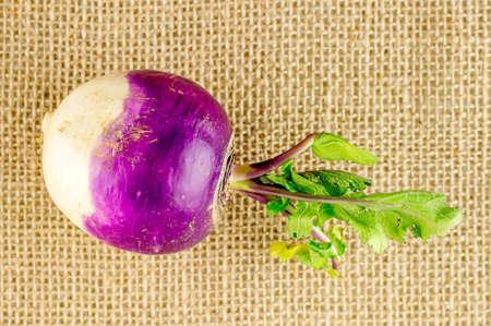 rutabaga: Tasty fresh organic turnip on burlap texture
