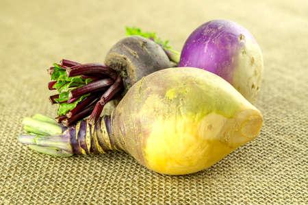 rutabaga: Beige colored swede and other farm fresh turnips