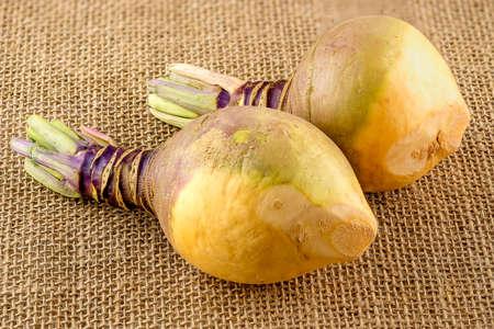 Fresh Swedish turnips
