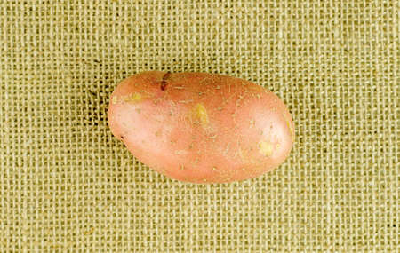wholesome: Rustic wholesome pontiac potato