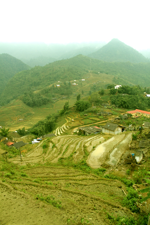 yuan yang: Terraced rice field in rice season, Vietnam Stock Photo