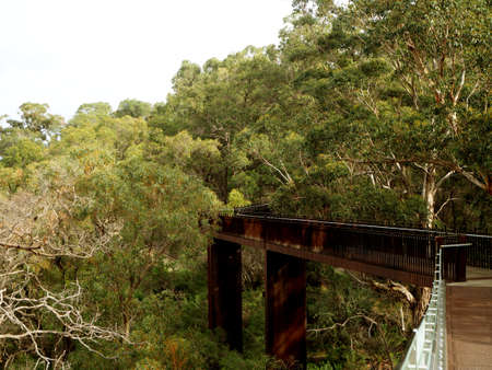 perth: Wooden boardwalk in Kings Park, Perth Stock Photo