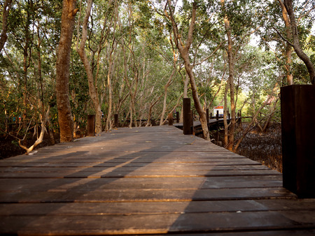 prong: wood bridge at thung prong thong ,Rayong , Thailand