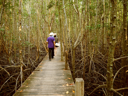 prong: Walkway with wooden at Golden Meadow Prong, Thailand