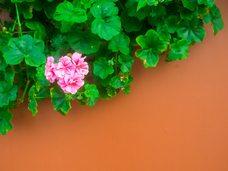 pink flower on the wall.