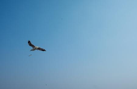 Watching seagulls at Bangpoo, Thailand. Winter season. Banque d'images