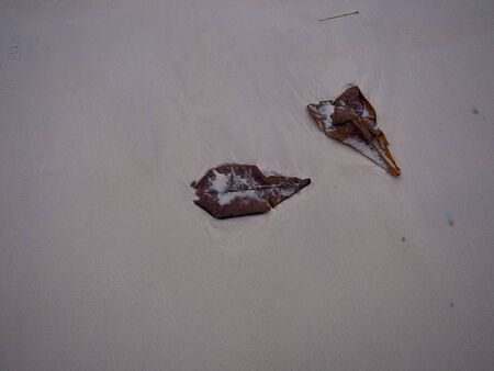 Fallen leaf on fine sand beach. White sand island beach background